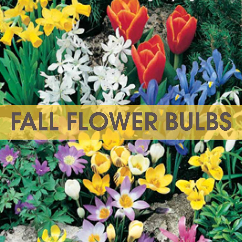 Tom-Wat Fall Flower Bulb Fundraiser