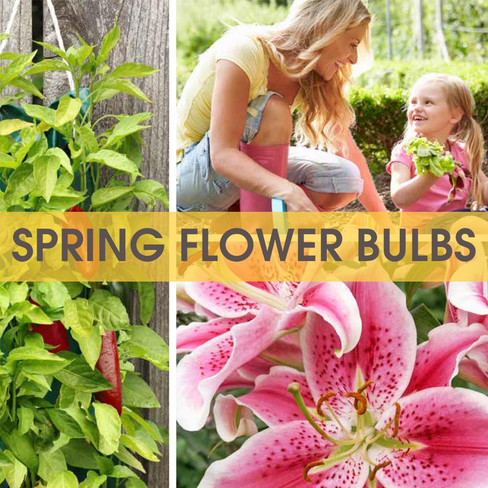 Tom-Wat Spring Flower Bulb Fundraiser